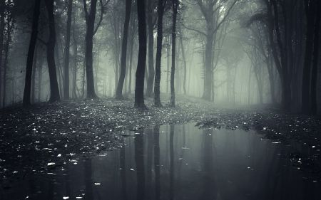 9371-dark-creepy-forest