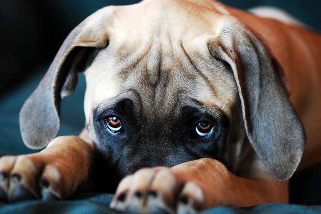 sad-puppy2.jpg